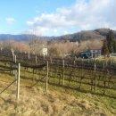 Terreno agricolo in vendita a Moruzzo