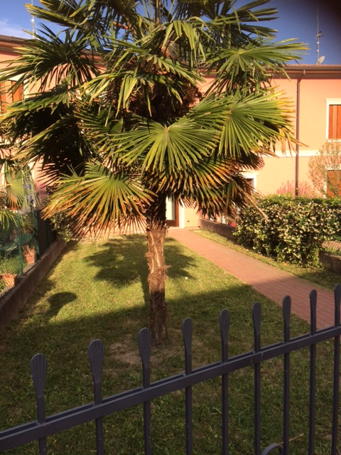 Villaschiera bicamere in affitto a Turriaco - Villaschiera bicamere in affitto a Turriaco