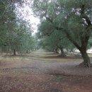 Terreno residenziale in vendita a ceglie-messapica