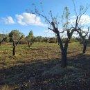 Terreno residenziale in vendita a ostuni