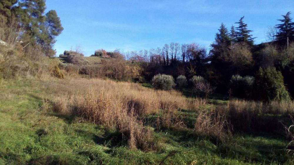 Terreno agricolo in vendita a Ascoli Piceno - Terreno agricolo in vendita a Ascoli Piceno