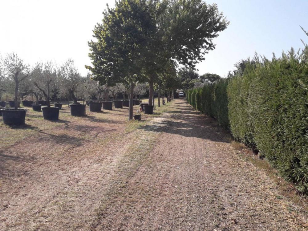 Terreno agricolo in vendita a Cepagatti - Terreno agricolo in vendita a Cepagatti