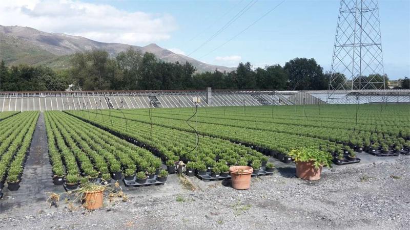 Azienda agricola in vendita a Salea - Azienda agricola in vendita a Salea