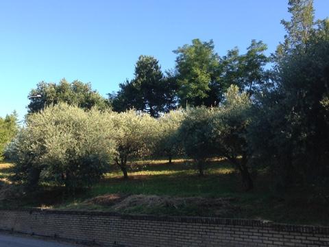 terreno residenziale in vendita a montegiorgio