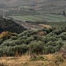 Terreno agricolo in vendita a soveria-simeri