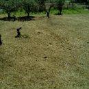 Terreno residenziale in vendita a Alife