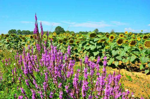 Terreno agricolo in vendita a pasiano-di-pordenone - Terreno agricolo in vendita a pasiano-di-pordenone